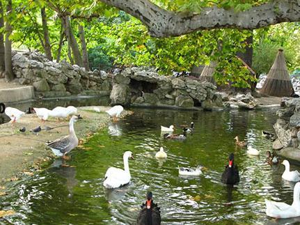 باغ وحش شهر بلگراد